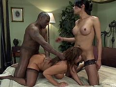 Ava Devine is getting naughty with hot tranny Jesssica Fox and some black dude. They all pet each other and then Ava gets her vag fucked by the shemale and the man.