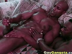 Steamy cock sucking and horny black gay seeing him fucking his ass a huge black dick of a muscle man. with Hot kissing while anal fucking and a nasty cumshots in the end.
