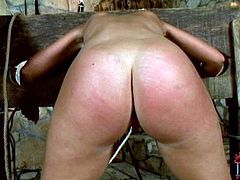 Fuckable slut is set against pillory while giving a blowjob