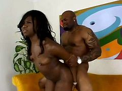 Hot tempered ebony chick hops on meaty black cock and her tits spice up with piercing bounce.later he pokes her gorgeous ass in doggy style.