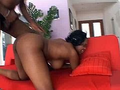 Perverted and hot booty black chick gets pounded doggy and sucks BBC