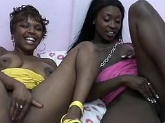 Black girls with big tits suck their nipples in the bedroom