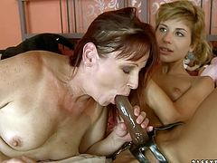 Sex greedy brunette mature widens her legs to allow a salty lesbian eat her bearded cunt before the former inclines to her strap on to suck it zealously.