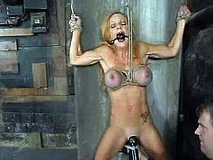 She is a former BDSM porn star and now she is back. Shannon Kelly gets tortured with a ball gag in her mouth. Her body missed a lot of pain!