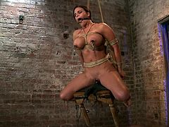 Mouse traps are used to torture Mackenzee Pierce's nipples in this bondage session that sees her pussy also toyed at the same time.