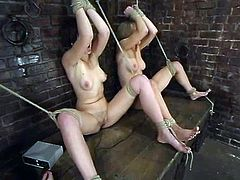 This is a lesbian BDSM perversions! Smoking hot siren Audrey Leigh is torturing two lusty sirens at a time. She uses some tools and ropes, of course!