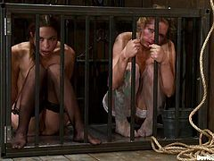 Two amazingly hot chicks shake their hot asses for their master. After that they get whipped and then fucked with a strap-on by the mistress.
