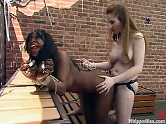 Two slender and desirable babes Natali Demore and Stacey Cash are loving each other. The ebony girl is the one who gets abused.