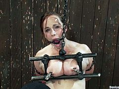 Chubby milf Bella Rossi gets her pierced snatch toyed in BDSM scene