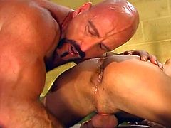 These three muscular, hairy guys blow and bang each other hard in a prison cell in this hardcore tube video.