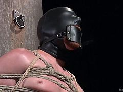This gay slave is tied to the post with a leather mask around his face and rope all around his body. His cock is rock hard and the dominant master tightly grabs the slave's penis with all his power and bites his nipples. Will he let the slave cum with a handjob?
