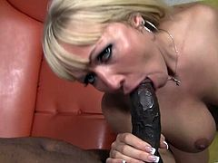 Big booty blonde in panties giving a big black cock blowjob before moaning while being pounded hardcore doggystyle in an interracial sex