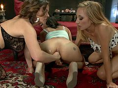 If anal sex comes first on your list, click to see two blonde ladies and a brunette babe, playing dirty and having fun while using sex toys. The busty milf offers the brunette a dildo to suck, before inserting it in her crazy ass. Click to see the sluts fisting ass and enjoying it!