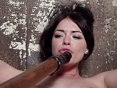 The situation is tough for the hot brunette babe in the video. Horny Ava is the prisoner of a fierce executor, who tied her up with ropes. The sensations intensify when the dirty game is spiced up with the use of vibrator. Sucking a dildo and inserting it into the slut's wet cunt, alternates in a kinky way.