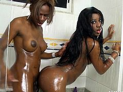They both have huge dicks, but one of these shemales has to be the bottom. So, naturally, it will be the one with the shorter dick and tighter asshole. The black honey takes the tranny cock deep in her anus and moans, as she is barebacked in the shower. The oiled transsexuals beat off together.