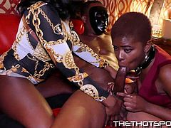 Check out these smoking hot and horny ebony bbw chicks getting their tight little pussies drilled hard by 2 black monster cocks in an orgy.